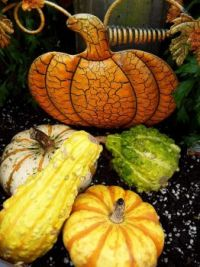 A larger version of autumn decorations