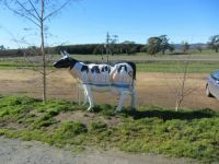 Another odd cow 2