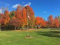Fall foliage.3