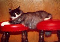 Duey Kitty