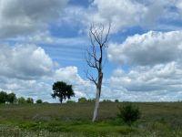 Tree's last days