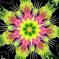 Passion Flower Kaleido