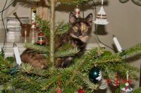 juletræ med kat
