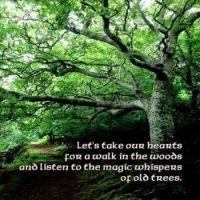 Whisper of Old Trees