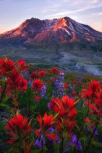 Old Volcano in Field of Wildflowers