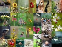 animals01_300