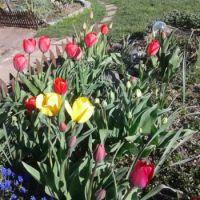 More flowers in Max's garden ♥