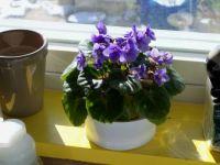 mini violet