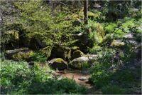 Panenská příroda kolem noserského potoku, který se zprava vlévá do vodní nádrže Dalešice