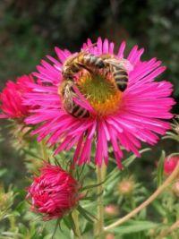 Zber peľu