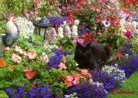 Edwina's Garden