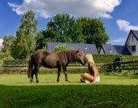 My beautiful horse