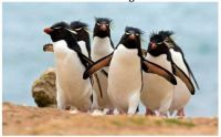 ~Penguins~