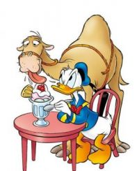 Donald Duck and his friend, the camel!