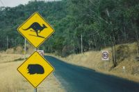 Roadsigns in Australia's Snowy Mountains (in summer)