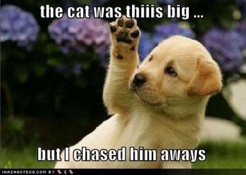 I Chased Him