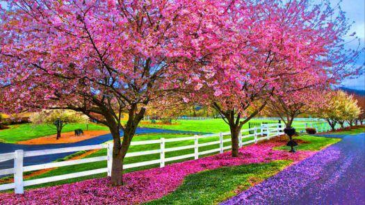 Springtime colors