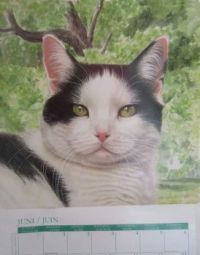 Calendar kitty June 2020