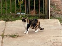 I met a cat today 😻