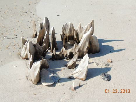 Beach stumps