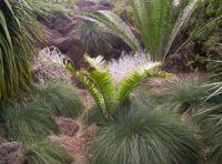 Royal Botanic Gardens1 - Melbourne