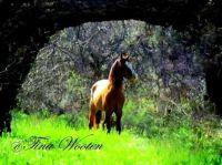 Wild Stallion. One Feather. 2014 Salt River AZ