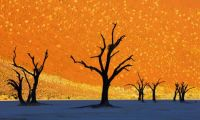 Dead Trees Park, Namibia