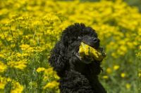 dog in yellow flowers