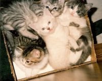 KittiesLitter1991