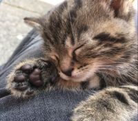 Dabria's paw