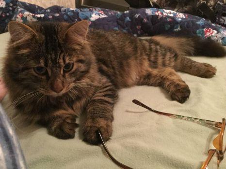 Kit Cat thinks he needs glasses