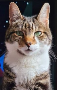 Handsome Rocky