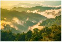 ~Thailand's Kaeng Krachan forest complex~