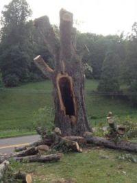 Screaming tree!