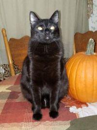 Happy Halloween from Brus