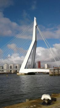 Rotterdam (Bridge) The Swan