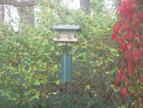 4 at the feeder, one waiting on a branch (on the left)