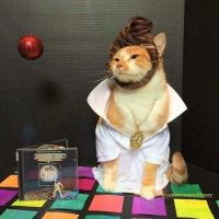 Cat Icon Game #38 - please identify!