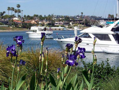 Point Loma - iris - boats
