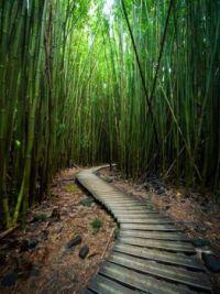 Pipiwai-Trail-Bamboo-Forest-Maui