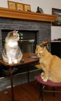 Ginger & Papaya in front of fireplace - 2021