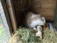 Bunny enjoying some treats