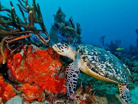 sea turtle.(spunky & the bandit).