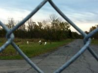 Deer at Seneca Lake--Oct 2012