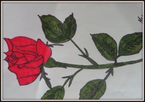 This is a red rose which I painted many years back