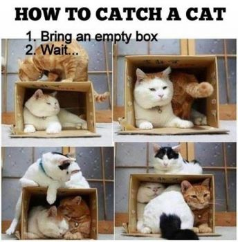 How to catch a cat!