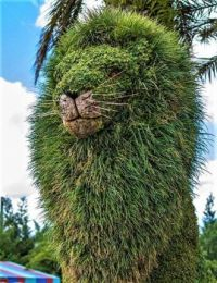 Lion topiary in Busch Gardens- Tampa, Florida