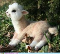 Is this a real baby llama or a stuffed toy? Hard to tell, huh?
