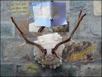My Birthday Antlers (Med.-Large)