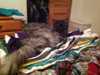 Kitty helps with laundry
